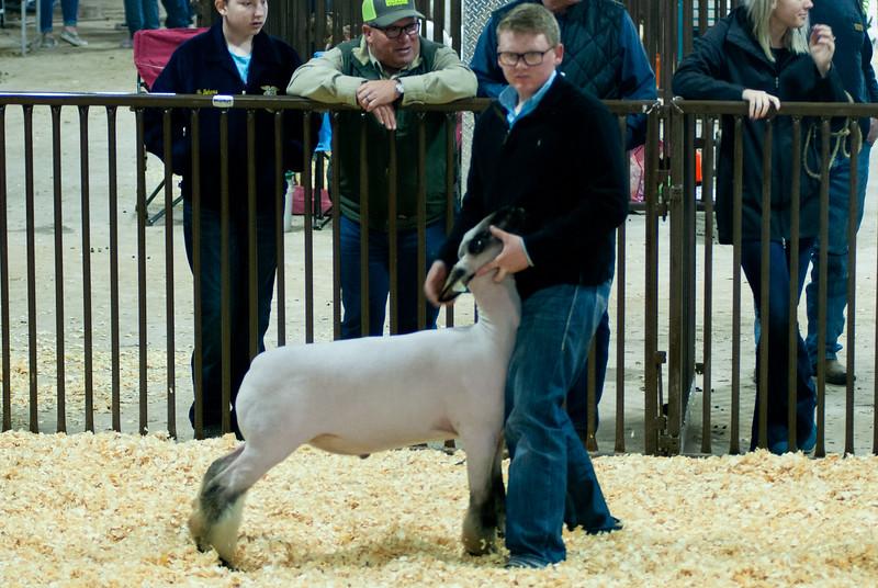 kay_county_showdown_sheep_20191207-76.jpg