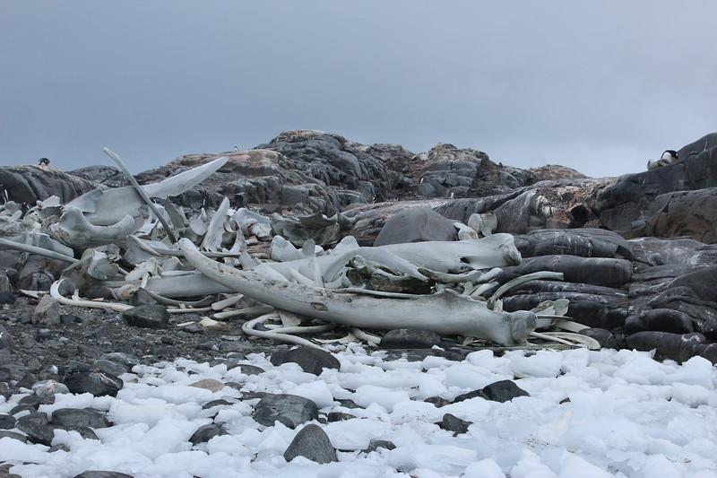 Antarctica 297.JPG
