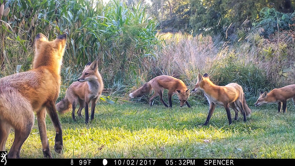 The Art of TrailCam Photography