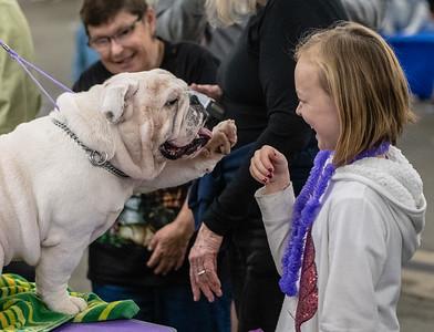 Golden Gate dog show 2019