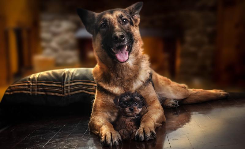 duo-dog-mod.jpg