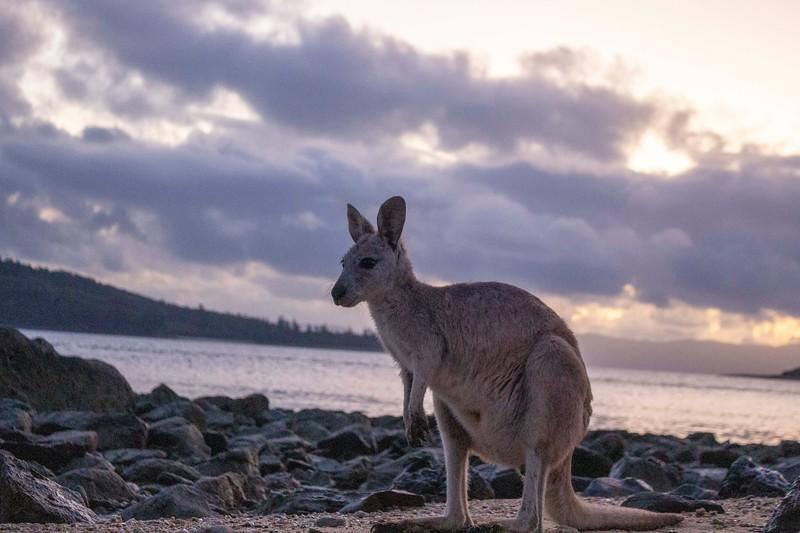 Australia_491.jpg