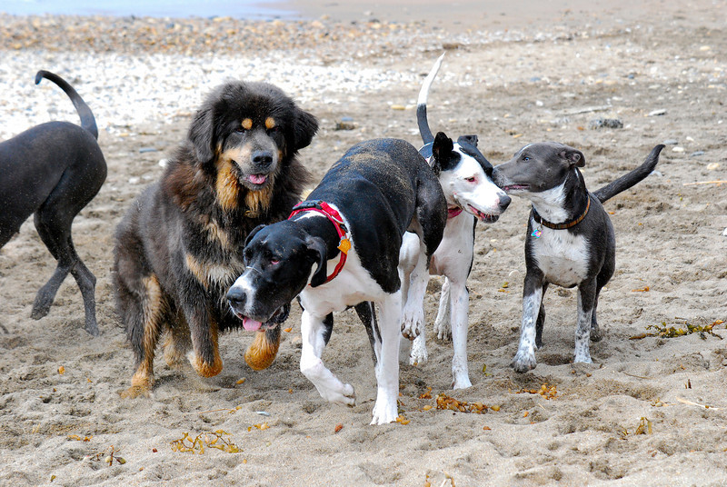 dogs_beach-028.jpg
