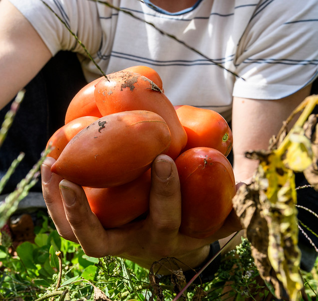 seeds weeds and tomatoes-39.jpg