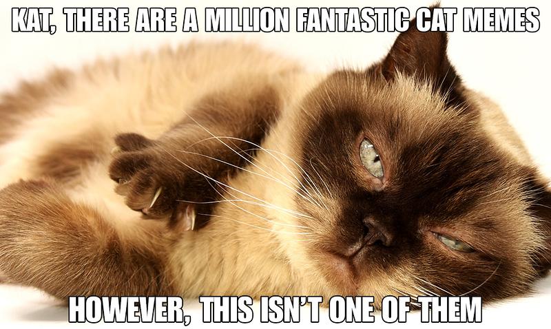 Cat Memes.jpg