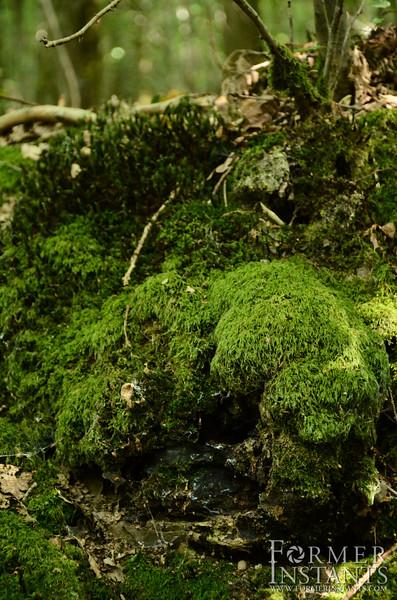 World of Moss