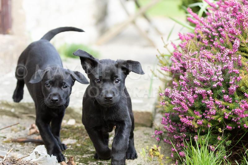 Weika Puppies 24 March 2019-6419.jpg