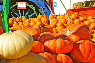 Casa de Fruta Pumpkins