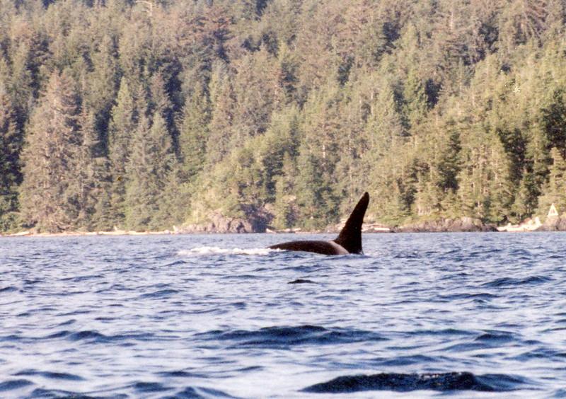 Orca028.jpg