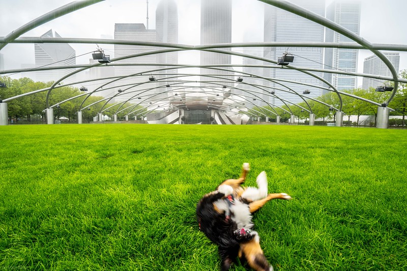 Mieko at Grant Park, misty day in Chicago