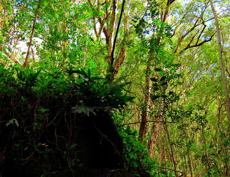 Kauai'10_S90_HDR5TC_20.jpg