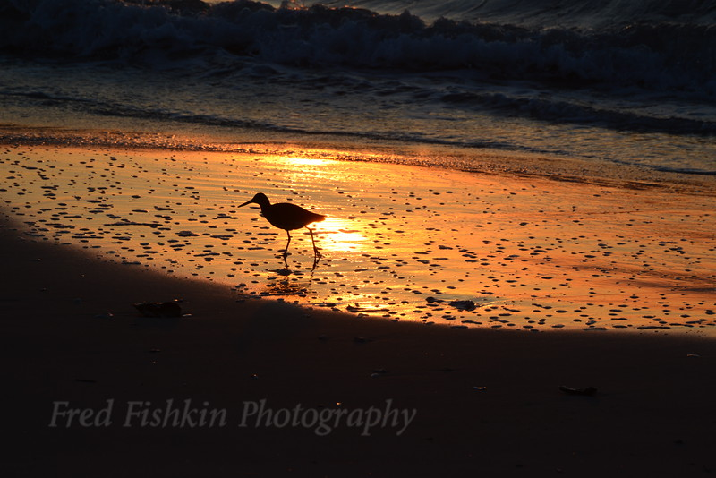 Piper at sunrise 05_02_18.JPG