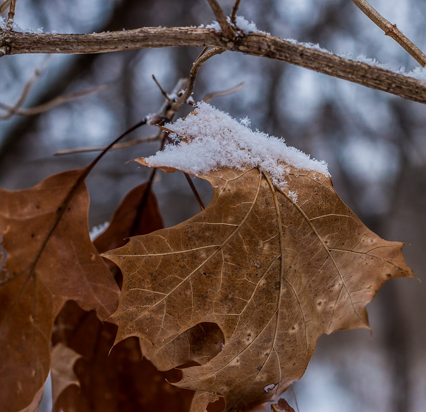 winter walk-2.jpg