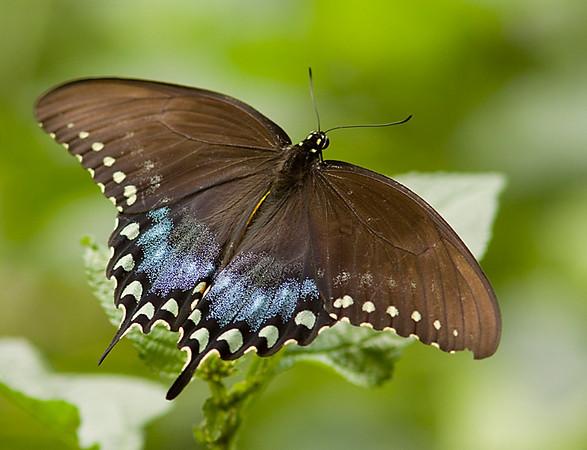 butterflies_BZ_Sept10_06.jpg