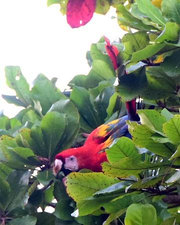Rio Sierpe Mangrove Tour
