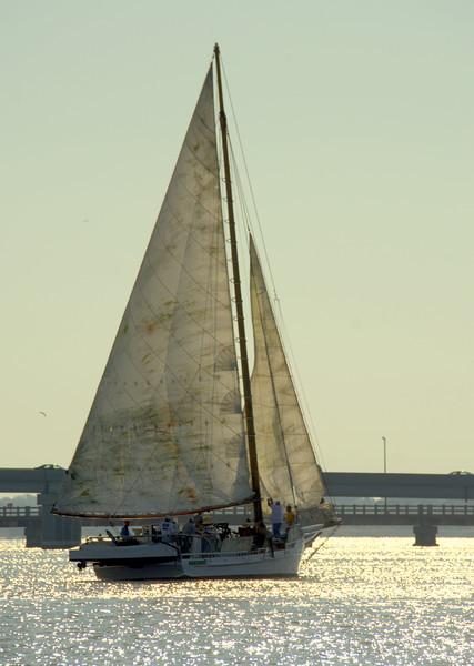 Skipjack Races in Cambridge Sept 21, 2013
