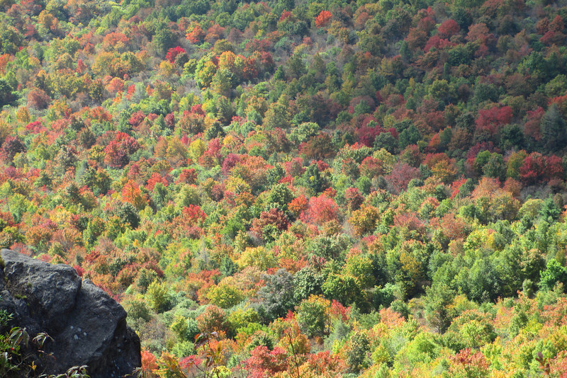 Art Loeb Trail -- 5,900'