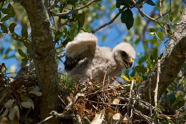 FCC Hawks Nest 2014