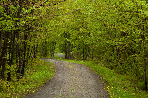Spring Road in the North Woods