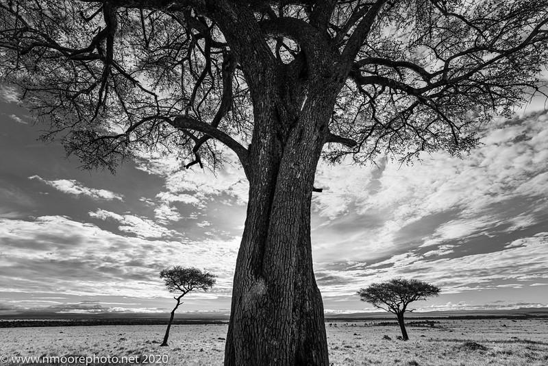 Gateway to the Mara