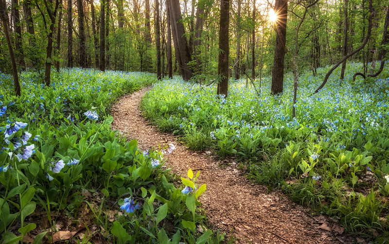 St. Francois State Park 0047, 04/15/2019