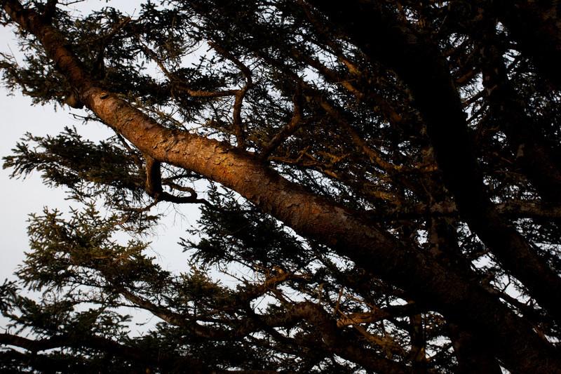 IMG_8962-20110417-Canon EOS 5D Mark II.jpg