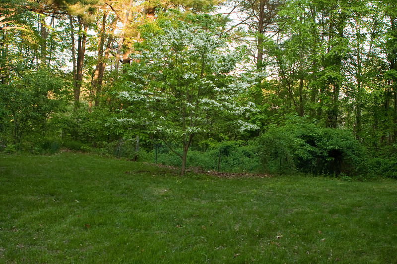 Tree and vegatable garden (containing only asparagus right now, needs cleanout).