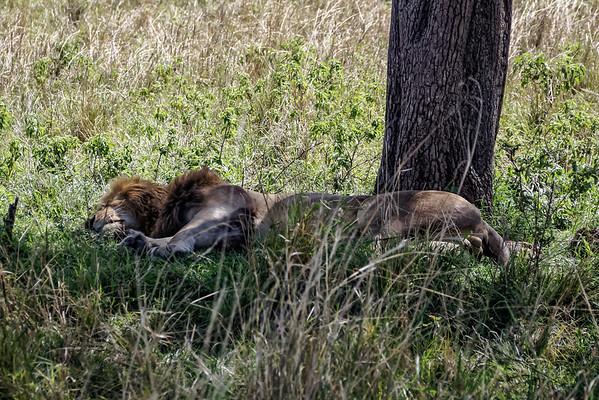 Kenya Safari 2015