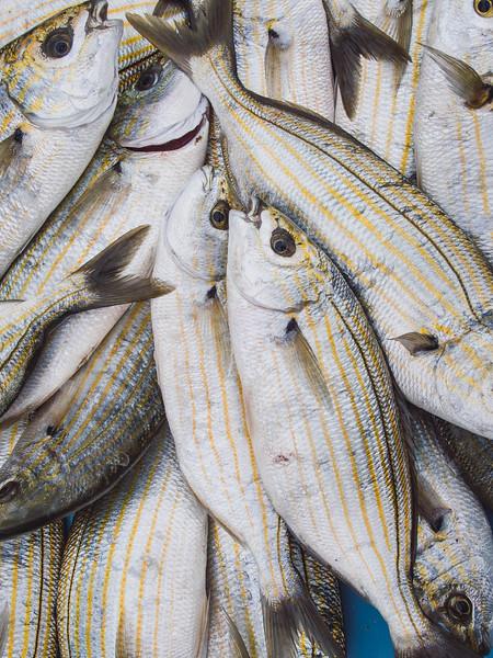 marseille fish market.jpg