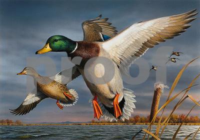 minnesota-artist-wins-2017-federal-duck-stamp-contest