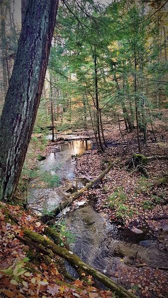 Wyville Creek West Ravine 20201023_155849 G McKenna.jpg