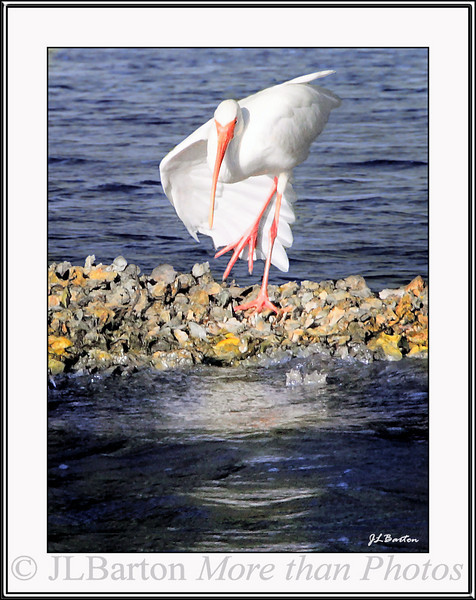 Shall we dance?