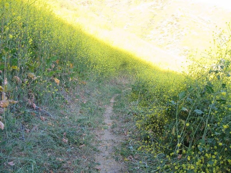 20080417010-New Millenium Trail, trailwork.JPG