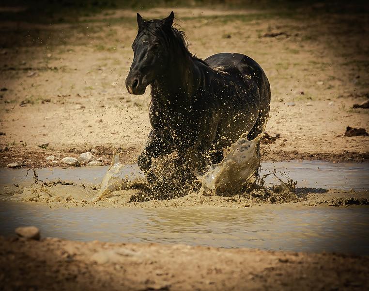 Black horse in mud.jpg