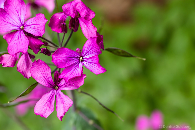 small flowers in pink, at certain angles showing the look of a butterfly
