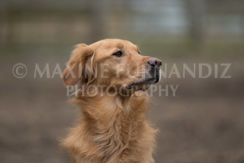 Dogs-5752.jpg