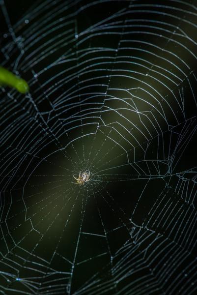 SPIDER - -1571.jpg
