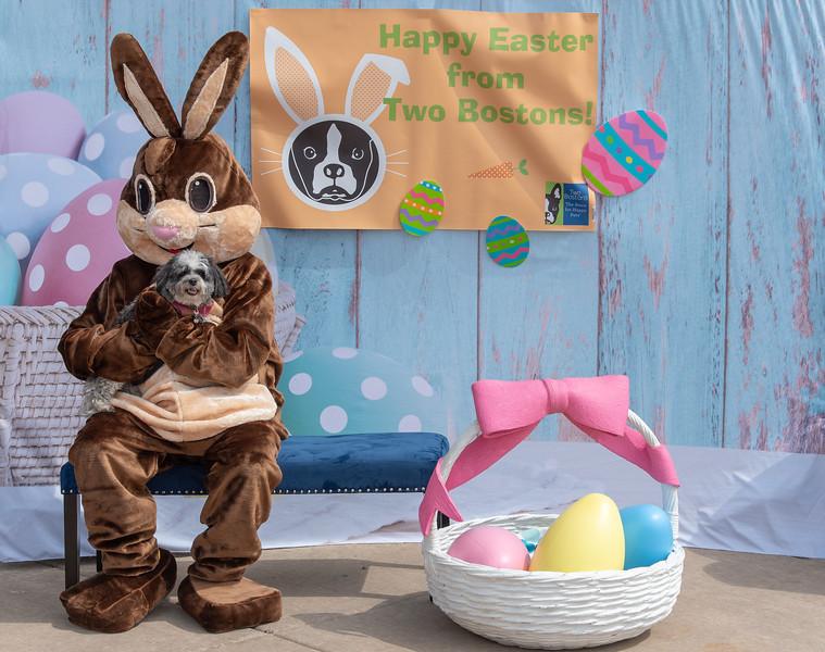 Easter2019TwoBostons-8228.jpg