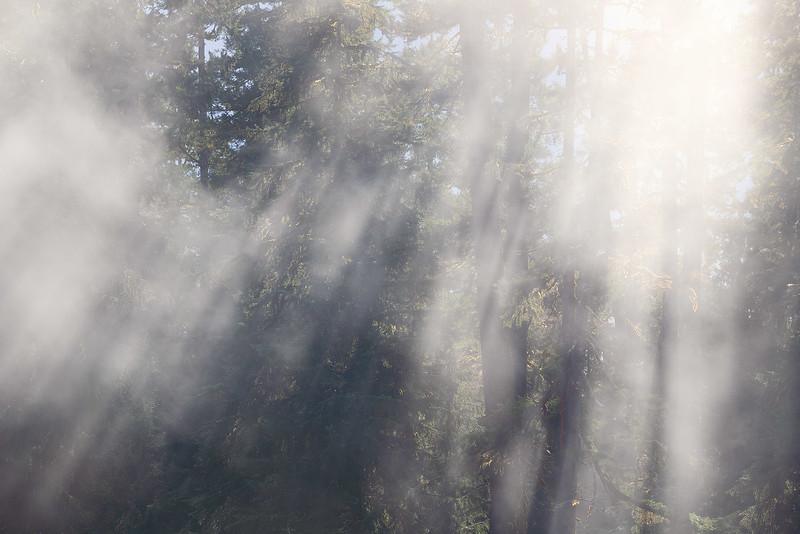Fanned Fog
