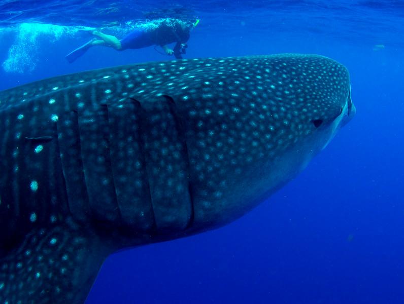 2014 Whale Shark - Cave Adventure-41.jpg