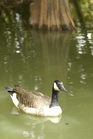 2007-10-04 Bog Garden