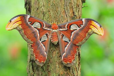 Butterfly_ some in flight!