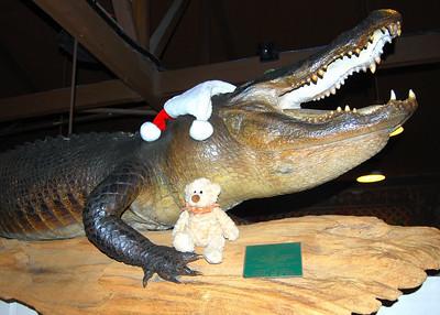 Christmas 2008 in Florida