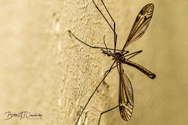 Macro_insect-1546.jpg