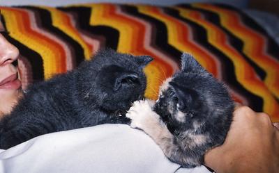 Nena & Roo as Kittens