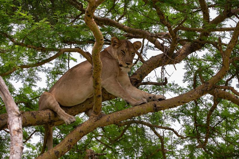 Uganda_T_QE-1132.jpg