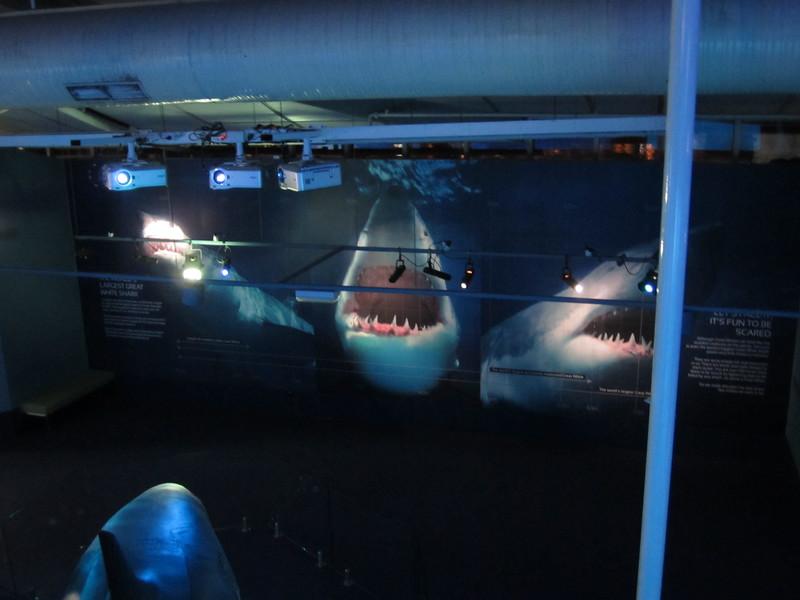 Sydney - Sydney Aquarium-34.JPG