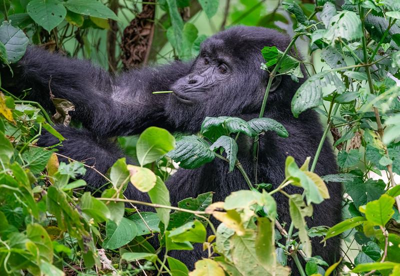 Uganda_T_Gor-2204.jpg