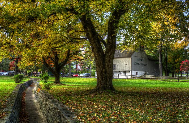 autumn 2014 - Ephrata cloister trees (p).jpg
