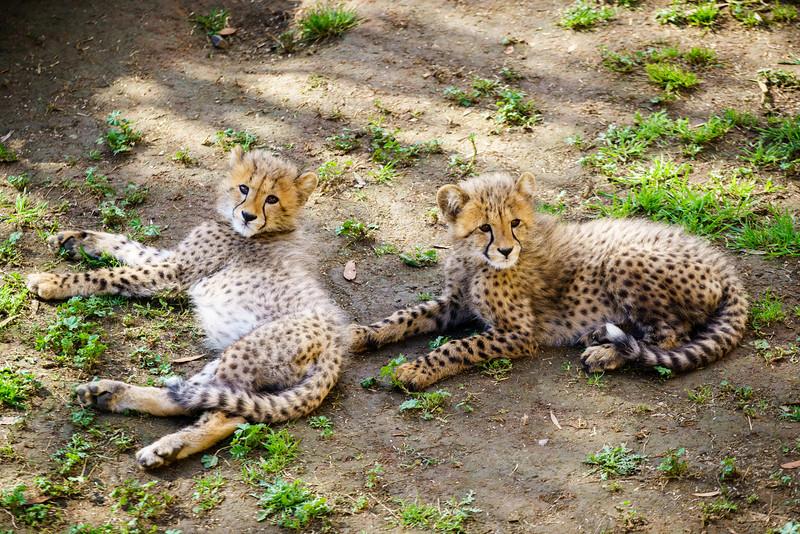 SouthAfrica-20150831-1211.jpg